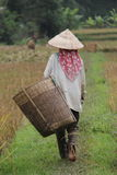 Agricoltore in Mai Chau Immagini Stock