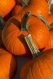 Agricoltore Market Pumpkins 2 di Rochester Fotografia Stock