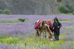 Agricoltore marocchino Fotografia Stock