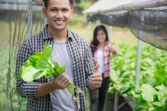 Agricoltore maschio in azienda agricola hydrophonic moderna Immagine Stock