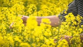Agricoltore maschio in Canola d'esame coltivato seme di ravizzone del giacimento agricolo del seme oleifero archivi video