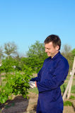 Agricoltore maschio che lega i rami dell'uva Fotografia Stock Libera da Diritti