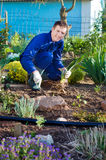 Agricoltore maschio che pianta un fiore dell'iride Fotografia Stock Libera da Diritti