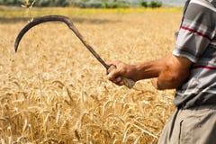 Agricoltore maschio che posa nel giacimento di grano coltivato Fotografia Stock Libera da Diritti