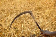 Agricoltore maschio che posa nel giacimento di grano coltivato Fotografie Stock