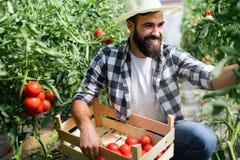 Agricoltore maschio felice attraente che lavora nella serra Fotografie Stock