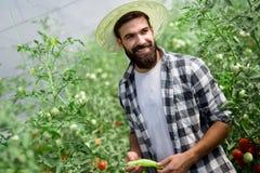 Agricoltore maschio felice attraente che lavora nella serra Fotografia Stock