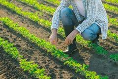 Agricoltore maschio irriconoscibile nel giacimento della soia Immagini Stock