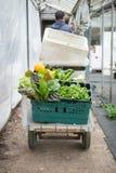 Agricoltore maschio Pulling un carrello degli ortaggi freschi Fotografie Stock Libere da Diritti