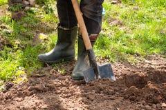 Agricoltore maschio In Rubber Boots con la pala e le patate in terra I Fotografia Stock