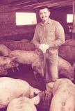 Agricoltore maturo in capannone con i maiali Immagini Stock Libere da Diritti
