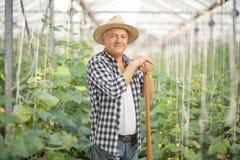 Agricoltore maturo che posa in una serra Fotografia Stock Libera da Diritti