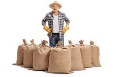 Agricoltore maturo che sta dietro i sacchi della tela da imballaggio Fotografia Stock