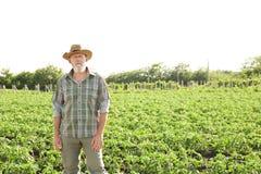Agricoltore maturo che sta nel campo con le piante verdi Immagine Stock