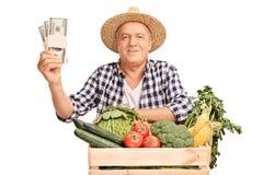 Agricoltore maturo che tiene poche pile di dollari Immagine Stock