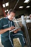 Agricoltore maturo che utilizza compressa nel granaio Fotografia Stock Libera da Diritti