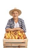 Agricoltore maturo con una cassa piena delle pere Immagine Stock Libera da Diritti