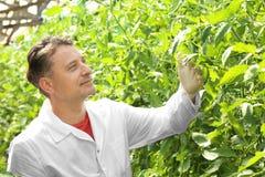 Agricoltore maturo in serra Fotografia Stock Libera da Diritti