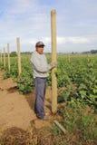 Agricoltore messicano nel Canada Fotografia Stock Libera da Diritti