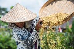 Agricoltore Near Ubud del riso in Indonesia Immagine Stock