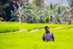 Agricoltore Near Ubud del riso in Indonesia Immagini Stock Libere da Diritti