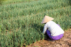 Agricoltore nei campi Immagini Stock