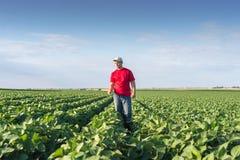 Agricoltore nei giacimenti della soia Fotografia Stock Libera da Diritti