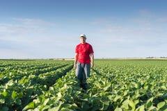 Agricoltore nei giacimenti della soia Fotografia Stock