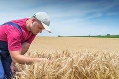 Agricoltore nei giacimenti di grano Fotografia Stock