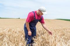 Agricoltore nei giacimenti di grano Fotografie Stock Libere da Diritti