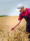 Agricoltore nei giacimenti di grano Immagini Stock Libere da Diritti