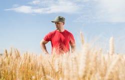 Agricoltore nei giacimenti di grano Fotografie Stock