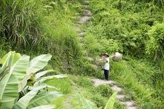 Agricoltore nei terrazzi del riso, Bali Fotografia Stock