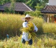 Agricoltore nel campo, è tempo di raccolto Fotografia Stock