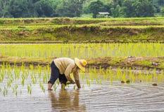 Agricoltore nel campo Immagini Stock Libere da Diritti