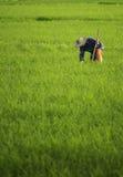 Agricoltore nel campo coltivato Fotografia Stock Libera da Diritti