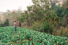 Agricoltore nel campo del cavolo Fotografie Stock