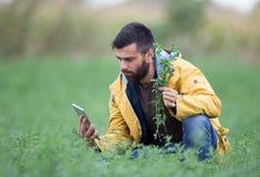 Agricoltore nel campo del trifoglio Fotografie Stock Libere da Diritti