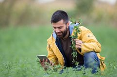 Agricoltore nel campo del trifoglio Fotografia Stock Libera da Diritti