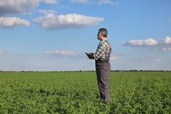 Agricoltore nel campo del trifoglio Immagini Stock