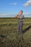 Agricoltore nel campo del trifoglio Fotografia Stock