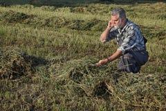 Agricoltore nel campo del trifoglio Immagini Stock Libere da Diritti
