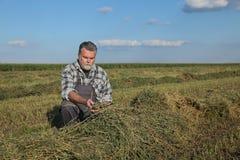 Agricoltore nel campo del trifoglio dopo il raccolto Immagini Stock Libere da Diritti