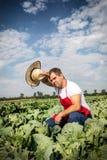 Agricoltore nel campo di cavolo con cielo blu Fotografia Stock