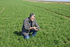 Agricoltore nel campo di grano Immagini Stock Libere da Diritti