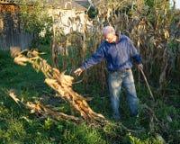 Agricoltore nel campo di grano Fotografie Stock