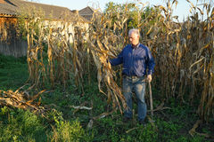 Agricoltore nel campo di grano Fotografie Stock Libere da Diritti