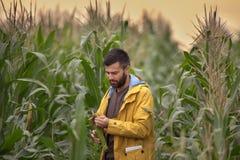 Agricoltore nel campo di grano Immagine Stock