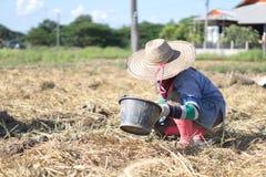 Agricoltore nel campo di tabacco Immagine Stock Libera da Diritti