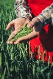 Agricoltore nel campo verde Fotografie Stock Libere da Diritti